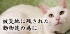 『犬猫救済の輪』動物愛護活動ドキュメンタリー